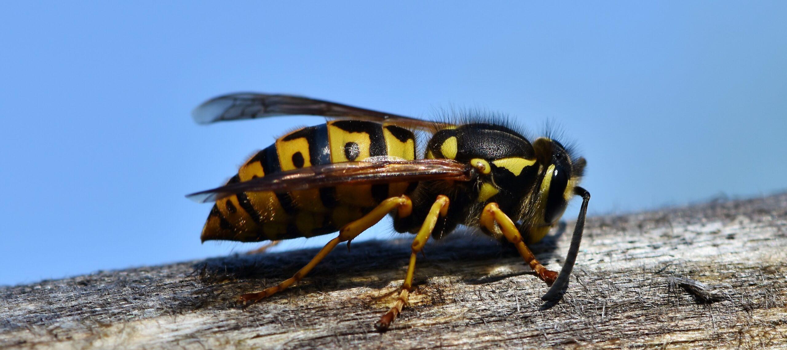 insetti alati